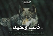 LONE Wolf or group of individuals 3705545 1